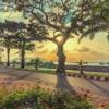 Bình minh Côn Đảo